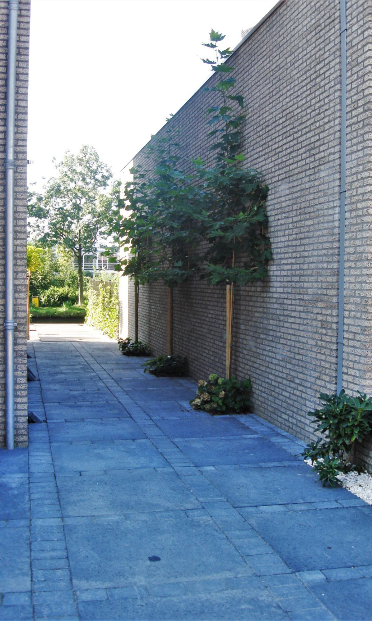 moderne tuin 3